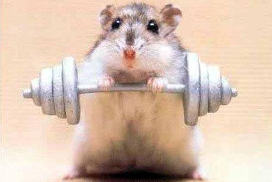 Ποντίκι αρσιβαρίστας