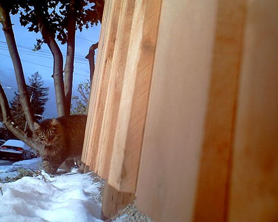 Γάτα Φωτογράφος