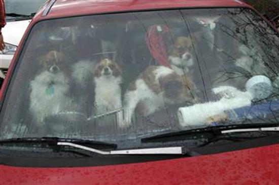 22 σκυλιά σε αυτοκίνητο