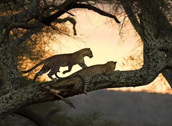 Αγαπημένα ζευγάρια ζώων