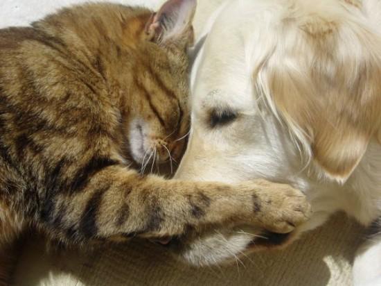 Γάτες και σκύλοι