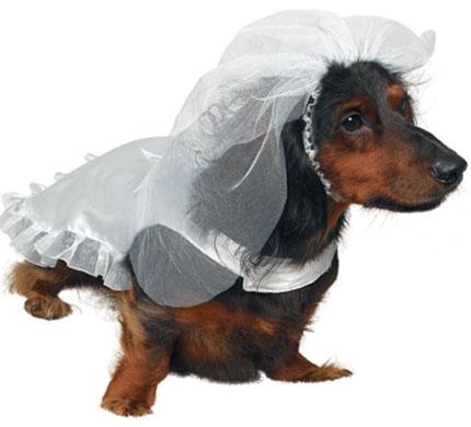 Σκυλί... νύφη