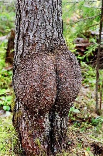 Παράξενα δένδρα