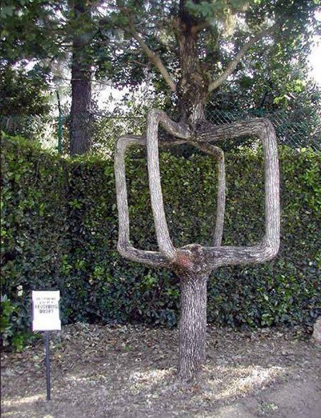 Παράξενα δέντρα