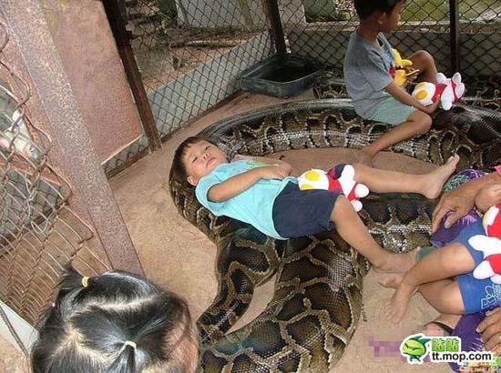 Παίζοντας με ένα τεράστιο φίδι (1)