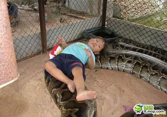 Παίζοντας με ένα τεράστιο φίδι (2)