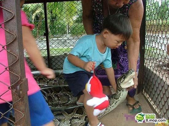 Παίζοντας με ένα τεράστιο φίδι (3)