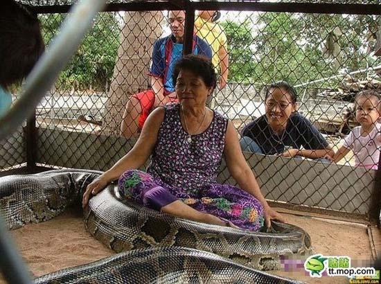 Παίζοντας με ένα τεράστιο φίδι (6)