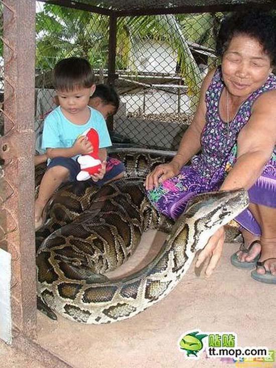 Παίζοντας με ένα τεράστιο φίδι (8)