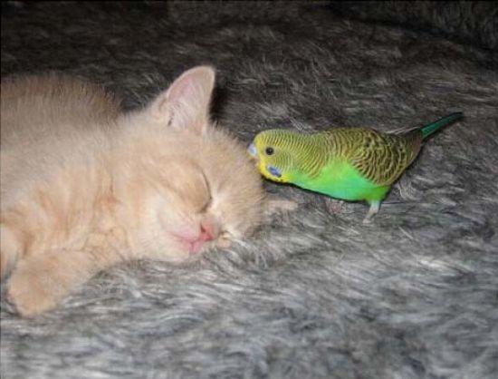 Μια παράξενη φιλία