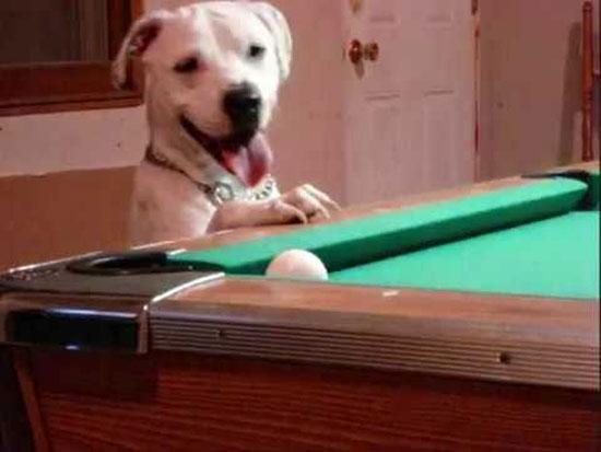 Σκύλος που παίζει μπιλιάρδο