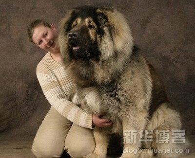 Τεράστια ζώα