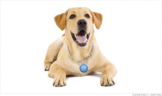 Twitter Dog