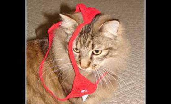 Γάτος - Κλέφτης γυναικείων εσωρούχων