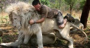 Ο γητευτής των λιονταριών (Photos & Videos)