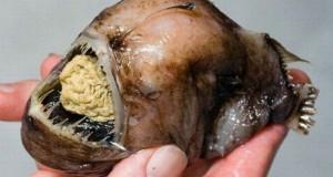 Τα πιο άσχημα και τρομακτικά ψάρια (Photos)