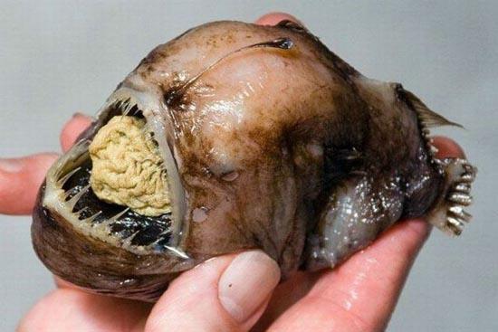 Τα πιο αποκρουστικά ψάρια του πλανήτη