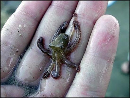 Photos only for animals Axiolatreyta-mikroskopika-zwa-25