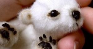 Αξιολάτρευτα μικροσκοπικά ζώα (Photos)