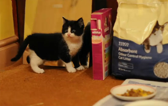 Όταν ένα γατάκι είδε τον εαυτό του στον καθρέφτη