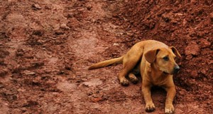 Η συγκλονιστική αφοσίωση ενός σκύλου (Photo)