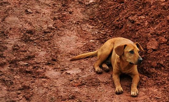 Η συγκλονιστική αφοσίωση ενός σκύλου
