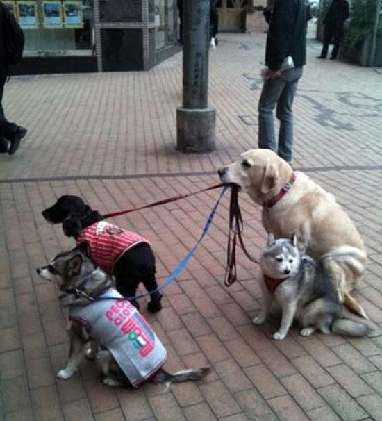 Φωτογραφία της ημέρας: Σκύλος Babysitter