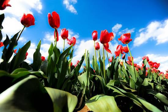 όμορφα λουλούδια (20)