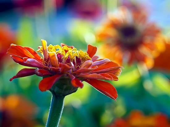 όμορφα λουλούδια (17)