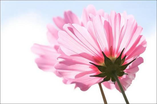 όμορφα λουλούδια (10)