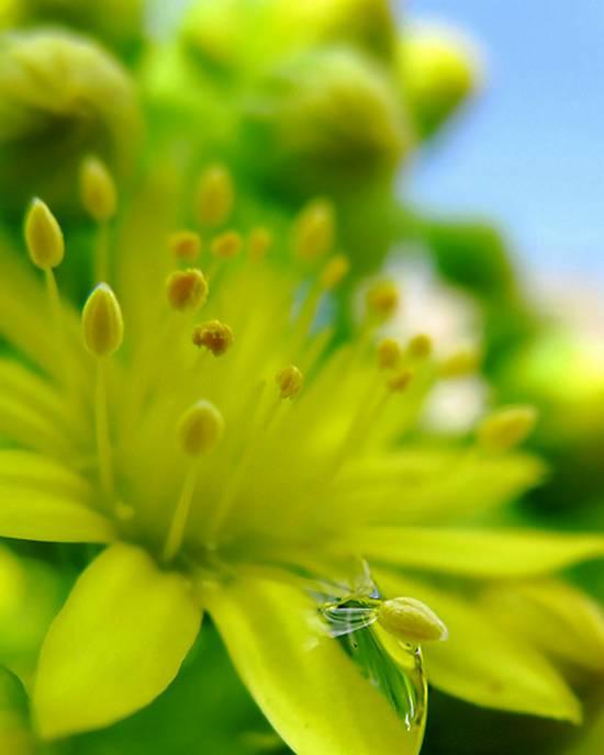 όμορφα λουλούδια (7)