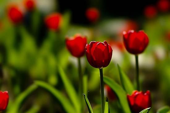 Πανέμορφα λουλούδια (φωτογραφικό