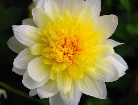 όμορφα λουλούδια (2)