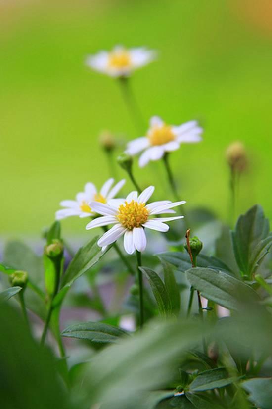 όμορφα λουλούδια (1)