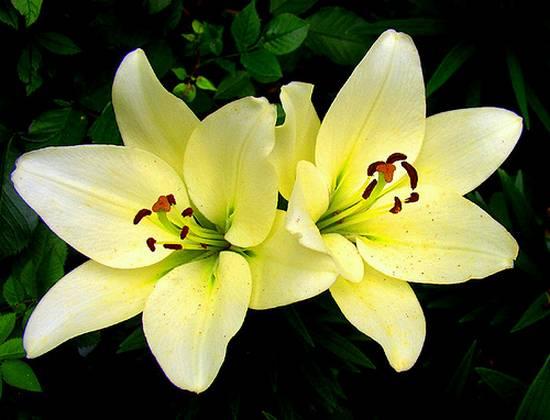 όμορφα λουλούδια (5)