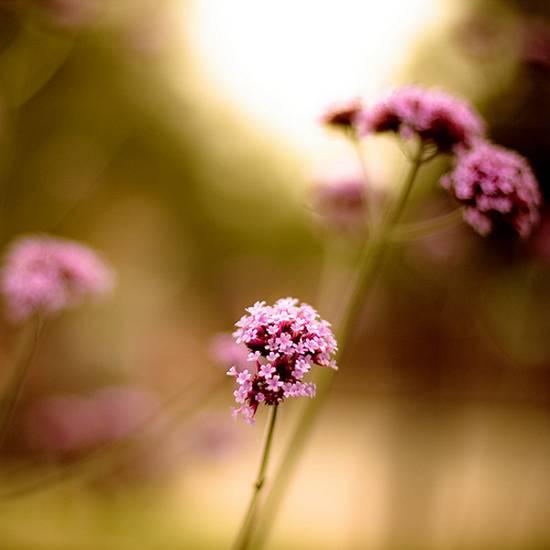 όμορφα λουλούδια (4)