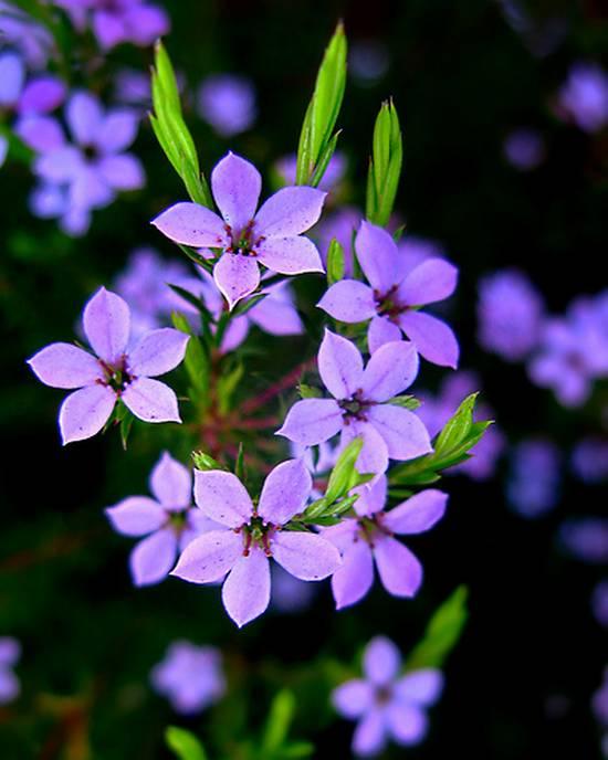 όμορφα λουλούδια (19)