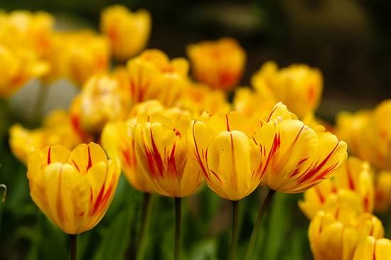 όμορφα λουλούδια (16)