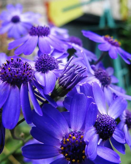 όμορφα λουλούδια (13)