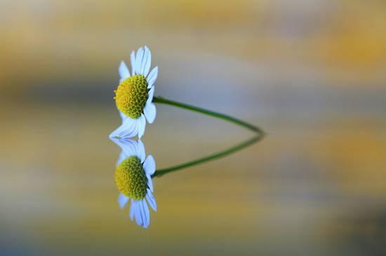 όμορφα λουλούδια (12)
