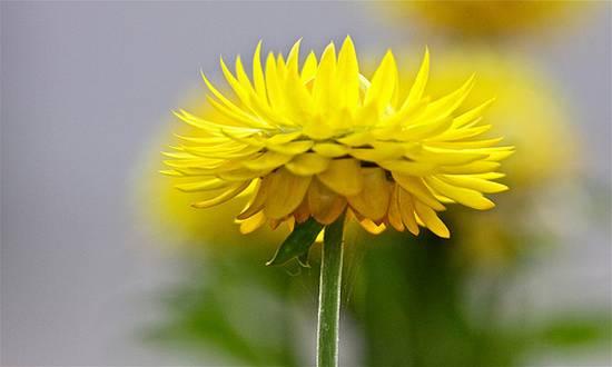 όμορφα λουλούδια (9)