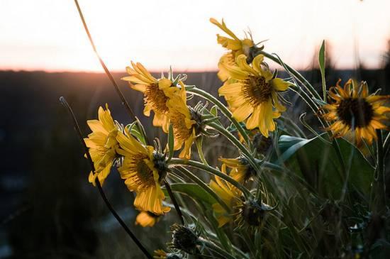όμορφα λουλούδια (8)