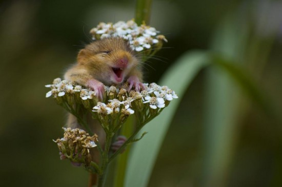 Φωτογραφία της ημέρας: I'm so Excited!