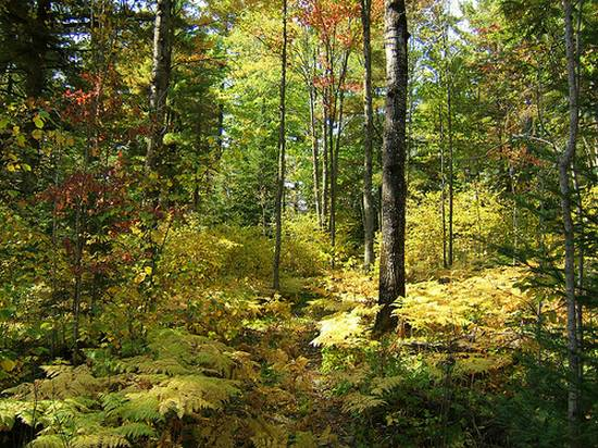 μοναδικά δάση (8)