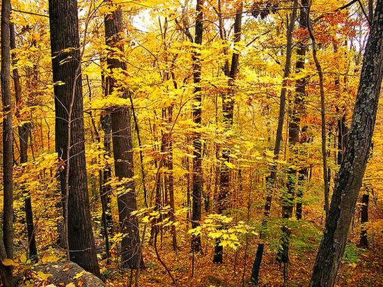 μοναδικά δάση (6)
