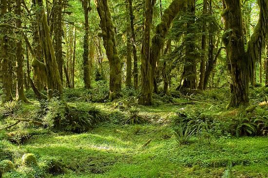 μοναδικά δάση (5)