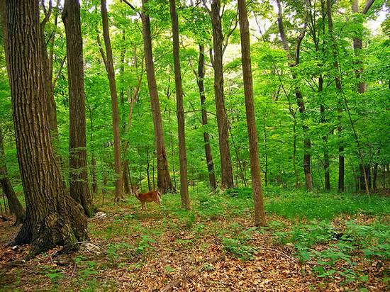 μοναδικά δάση (4)