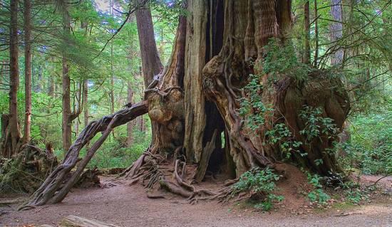 μοναδικά δάση (3)