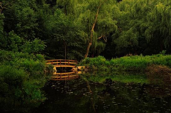 μοναδικά δάση (2)