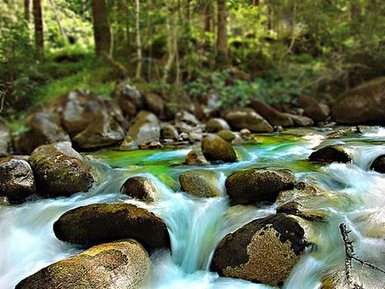 μοναδικά δάση (1)